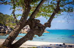 Tree on a beach and see background. Samui island Royalty Free Stock Image