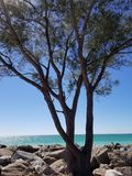 Tree beach Royalty Free Stock Images