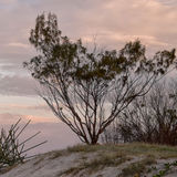 Tree on beach at sunset Stock Images