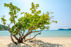 Tree on beach Royalty Free Stock Photos