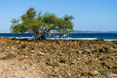 A tree beside the beach Stock Photography