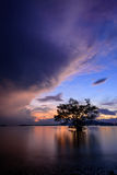 Tree on the beach in twilight, khao khad beach Stock Image