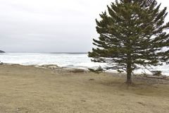 Tree on beach  stock photography