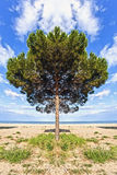 A tree on the beach Royalty Free Stock Image