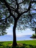 Tree at beachside park stock image