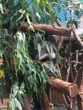 Tree bear from Australian and Hongkong royalty free stock images