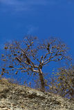 Tree with Beard Lichen in Southern Ecuador Stock Images