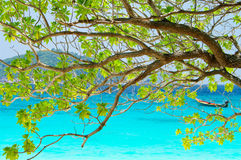 Tree on beautiful blue sea in background Stock Photo