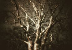 A tree with beautiful branches. A big old tree with its beautiful branches spread artistically into the sky royalty free stock photography