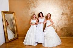 Tree beautiful brides Stock Image