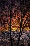 Through the Tree Stock Image