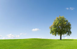 Tree in beautiful landscape Royalty Free Stock Photography