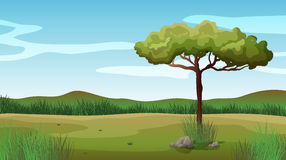A tree and a beautiful landscape Royalty Free Stock Photo