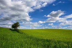 Tree in beautiful landscape. Single tree on horizon in beautiful landscape with blue cloudy sky Royalty Free Stock Photography