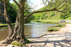 Tree life Royalty Free Stock Photography