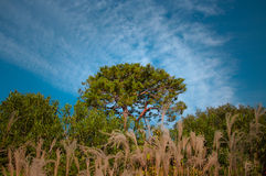 Tree With Beautiful Sky Royalty Free Stock Images