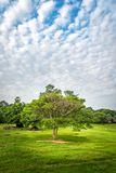 An  tree with a beautiful sky. View of an  tree with a beautiful sky Royalty Free Stock Image