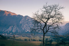 Tree on the beginning of the spring. Tree with no leaves waits for the spring. Beautiful landscape of green fields and rocky mountains of Matka, Macedonia stock photography