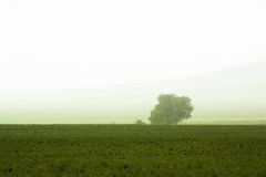 Tree behind a farm Royalty Free Stock Image