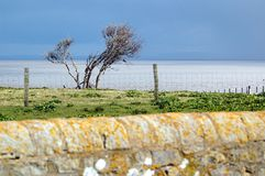 Tree behind wall. Little tree on Flat holm island behind wall and fence with sky and sea royalty free stock image