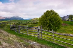 Tree behind the wooden fence. Beautiful rural scenery in mountainous area on a cloudy springtime day Royalty Free Stock Photos