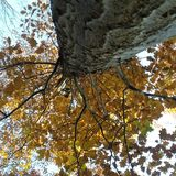 Tree. From below Royalty Free Stock Photo