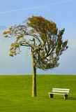 Tree and bench. On an ideal lawn Stock Photos