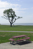 Tree and Bench. Picnic bench with a tree in a park Royalty Free Stock Photo