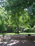 Tree and bench. From Edinburgh's botanics stock photo