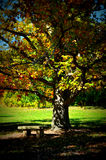 Fall Tree Bench. A tree with a welcoming bench, displaying brilliant fall colors at the University of Wisconsin Arboretum in Madison, WI Stock Image
