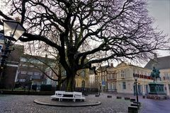 Tree and bench in front of royal palace the Hague Royalty Free Stock Photography