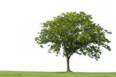 Tree with  bench and green grass isolated Stock Images