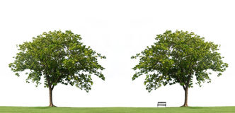 Tree with  bench and green grass isolated Royalty Free Stock Photography