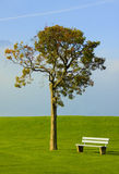 Tree and bench on an ideal lawn. On a background blue sky in Alps Royalty Free Stock Photography
