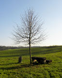 Tree and bench. Tree and a bench in a meadow blue sky in the background, a place to rest Royalty Free Stock Photo