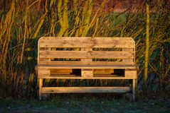 Tree bench in the morning light out in nature royalty free stock image