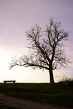 Tree and Bench Silhouette Scene Stock Images