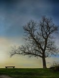 Tree and Bench Silhouette Scene HDR Royalty Free Stock Photography