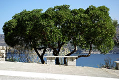Tree And Bench. Stone bench in tree shade at walkway along seashore at sunny summer day Royalty Free Stock Photo