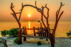 Tree bench on the sunset over the sea Stock Photography