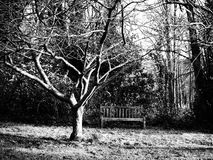 Tree and bench. Winter scene featuring a bench with bare tree nearby Stock Photography