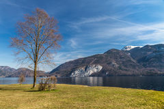 Tree,Bench,Wolfgang Lake,Grosser Hollkogel-Austria Stock Photography