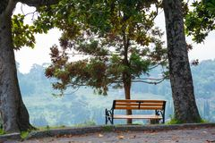 A tree with a bench. Wood with bench, concept of rest, relax in the Park Stock Photos