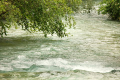 Tree bending low into river stream Royalty Free Stock Photos