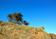 The tree that bends but does not break Royalty Free Stock Photo
