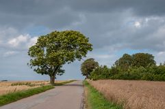 Tree bends over a road in Oroe in Denmark Royalty Free Stock Photos