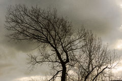Tree Bent Backwards. Large tree with many branches and few leaves bent backwards against stormy sky stock images