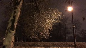 Tree with bent branches and a lamp post. A tree with gnarled branches and a lamp post, a tree trunk covered with snow, the soft light from the lantern, in the stock footage