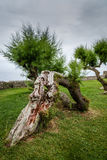 Tree bent and deformed. By the wind Royalty Free Stock Photos