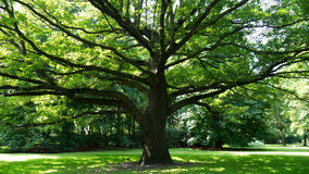 Tree in berlin tiergarten Royalty Free Stock Photo